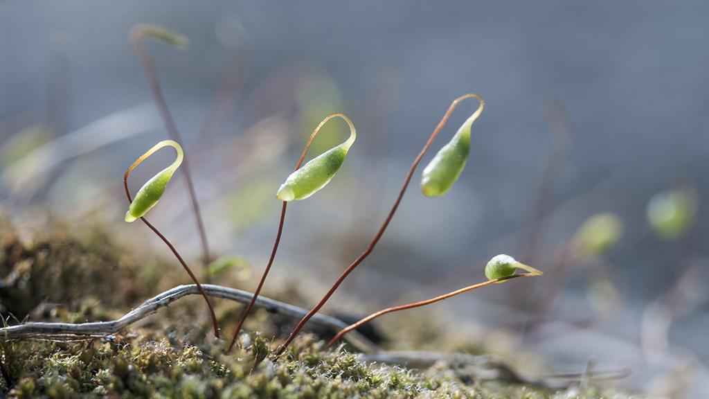 Mini forêt .... 20130415