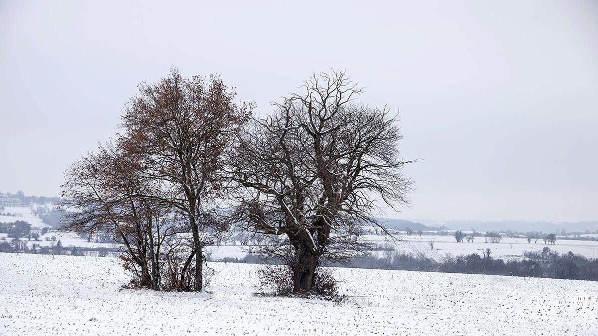 Gang of trees .... Img_2217