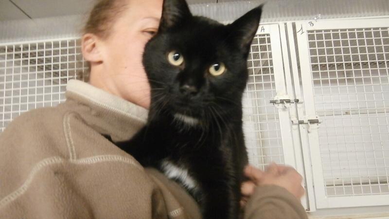 PALMITO (chat noir) P3247226