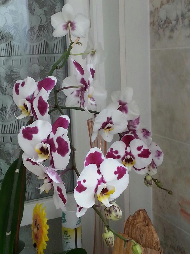 Les orchidées - Page 32 20180473