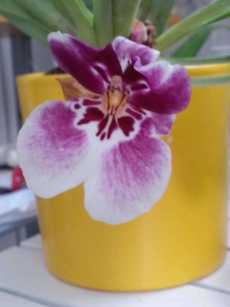 Les orchidées - Page 32 20180474