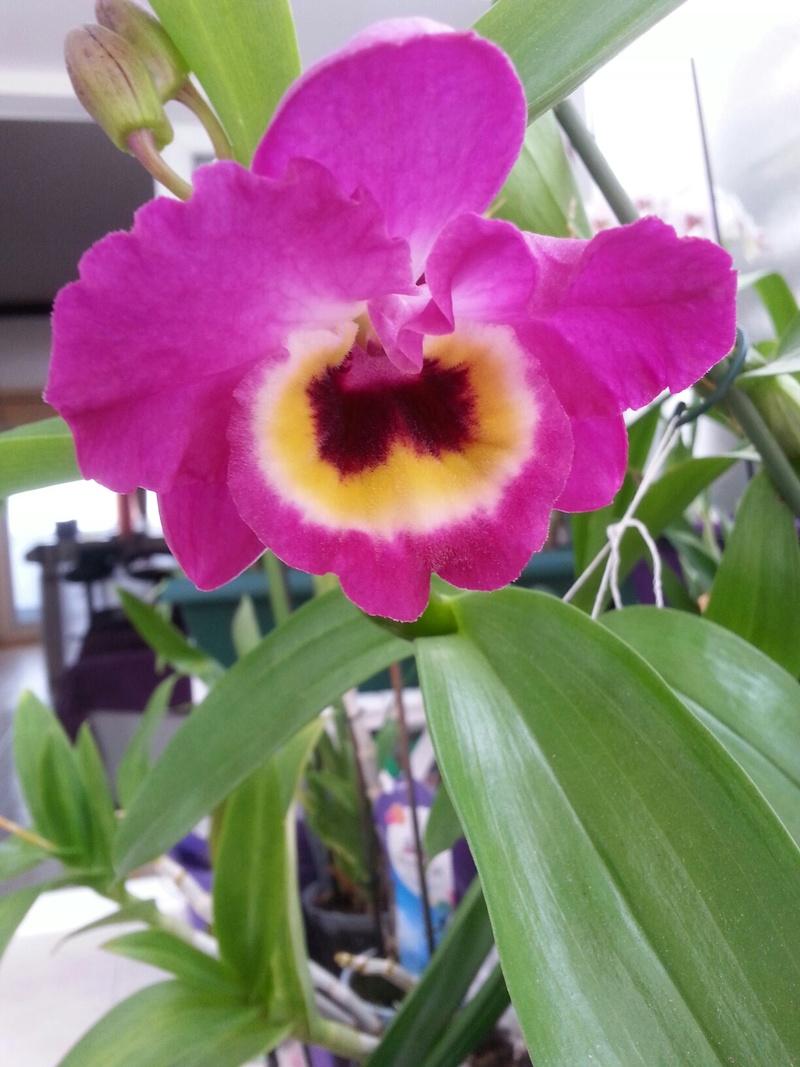Les orchidées - Page 32 20180476