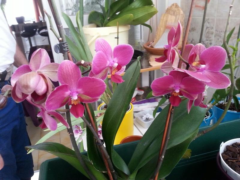 Les orchidées - Page 32 20180477