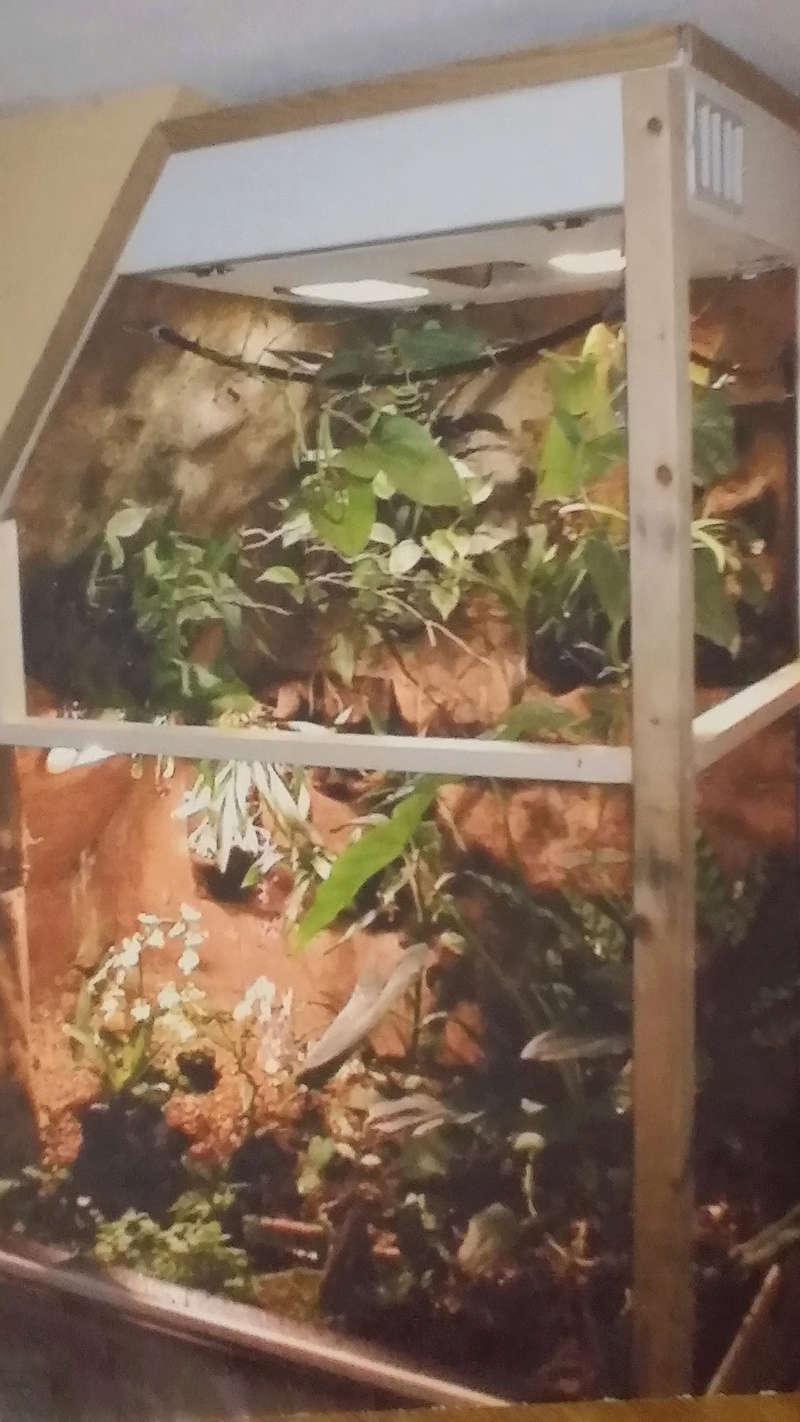 Projet de mise en place d'un vivarium humide planté, pour nos phelsu m. grandis. 20171112