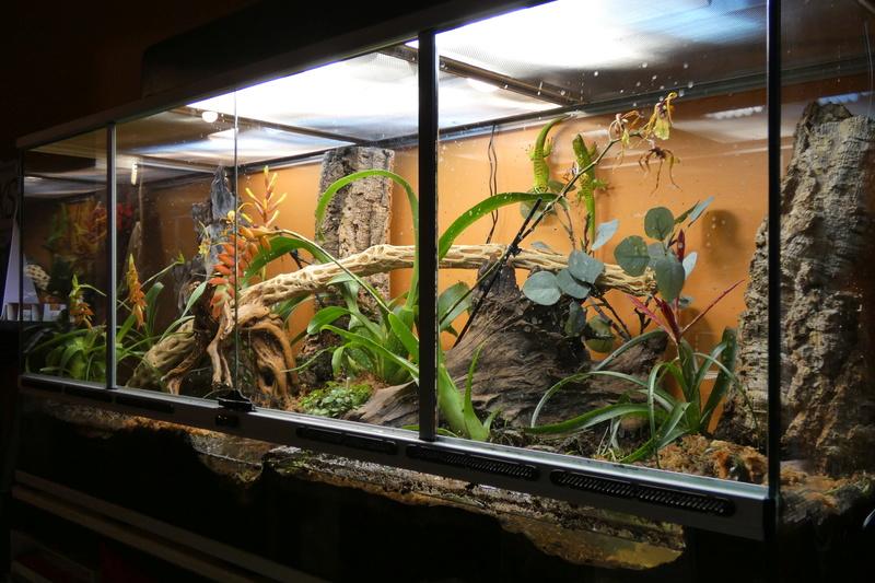 Projet de mise en place d'un vivarium humide planté, pour nos phelsu m. grandis. P1000011