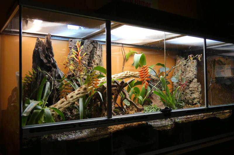 Projet de mise en place d'un vivarium humide planté, pour nos phelsu m. grandis. P1000012