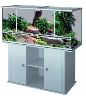 Projet de mise en place d'un vivarium humide planté, pour nos phelsu m. grandis. Vivari10