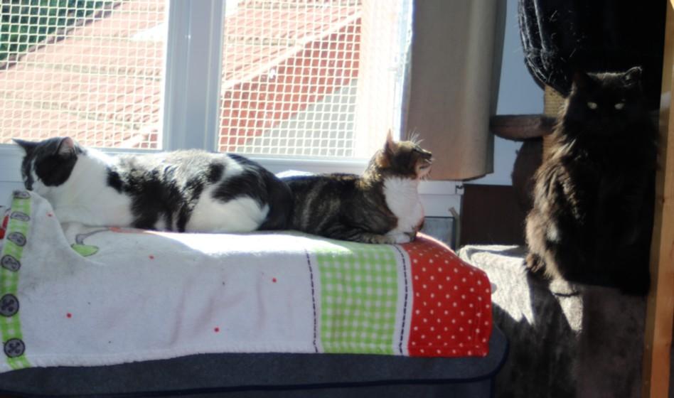 Systèmes de protection pour vos chats Copie427
