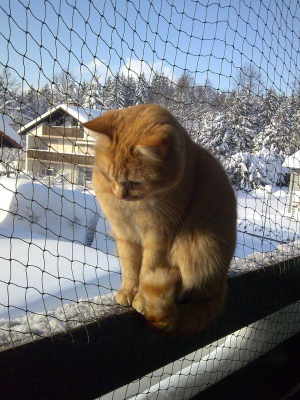 Systèmes de protection pour vos chats Filet_14