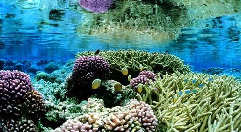 Bush crée la plus grande réserve marine du monde C017e410