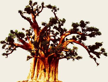 Mickaël et Stéphane sont partis découvrir le monde - Page 3 Baobab10
