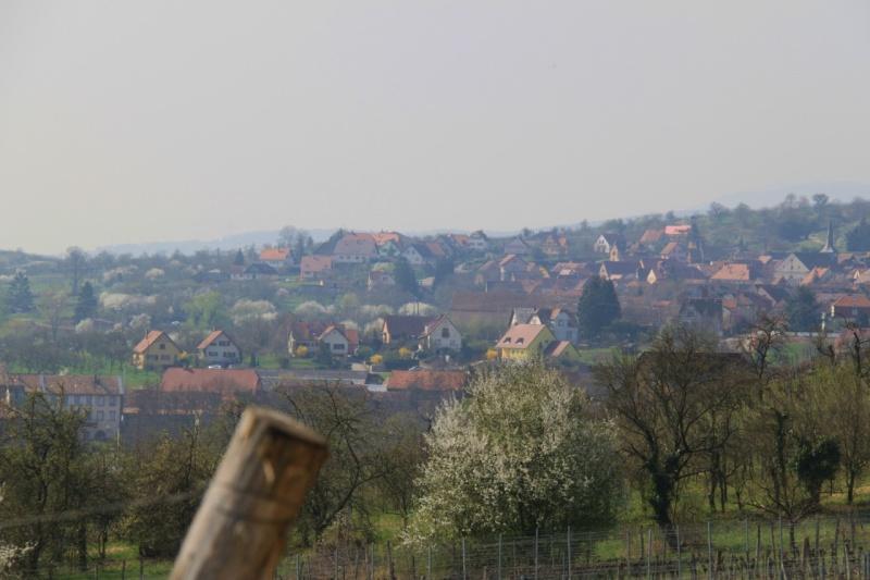 Sur le Marlenberg ....... Img_2512