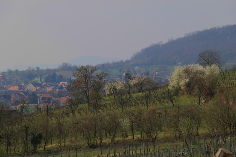 Sur le Marlenberg ....... Img_2513
