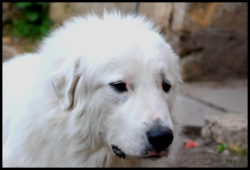 Beaux chiens Dsc_1018