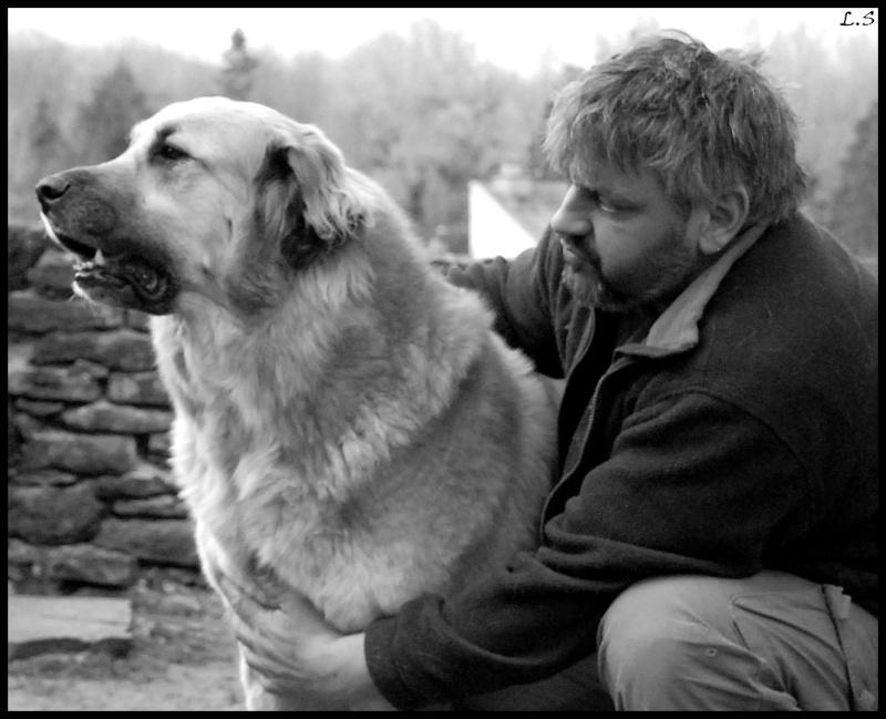 Beaux chiens Dsc_1019