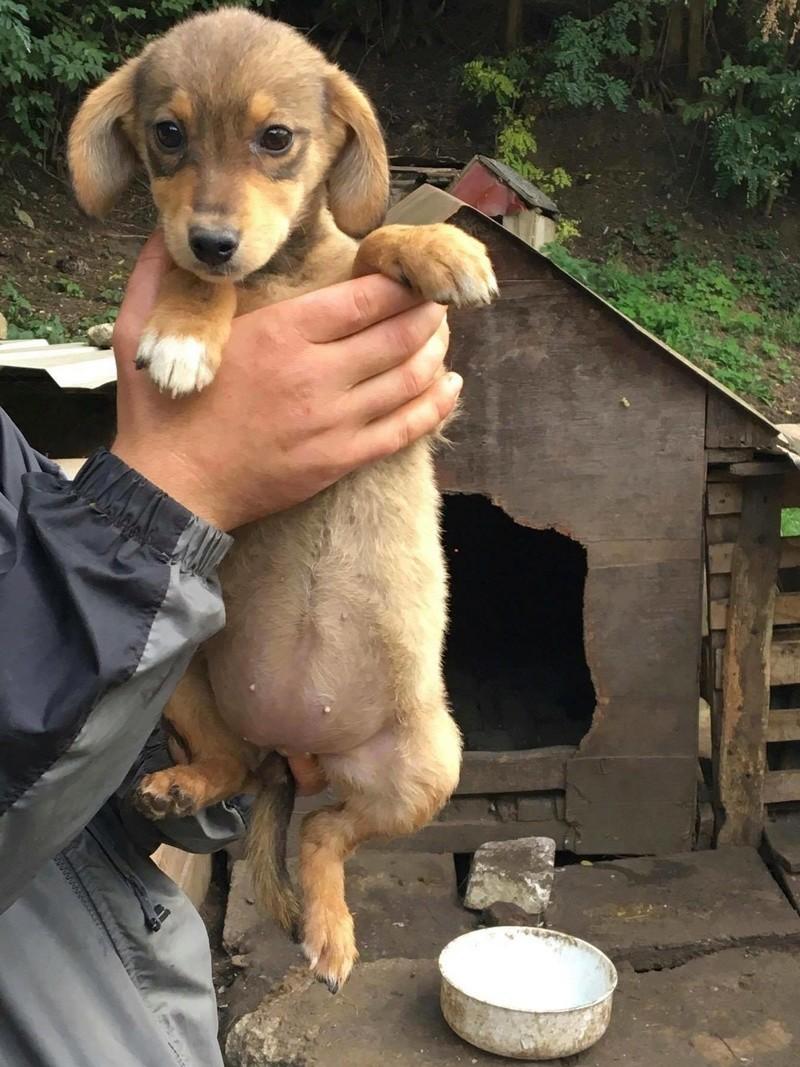 CHOUPETTE - femelle croisée de petite taille adulte, née en juin/juillet 2017 (PASCANI) - EN FA CHEZ LUMINITA - réservée adoption par Ange2994 (94)Décédée  22563814