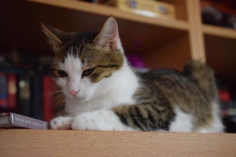 MUGUREL - chat mâle, né mai 2017. Très gentil et doux - CARMINA BUCAREST - adopté en Allemagne 25344210