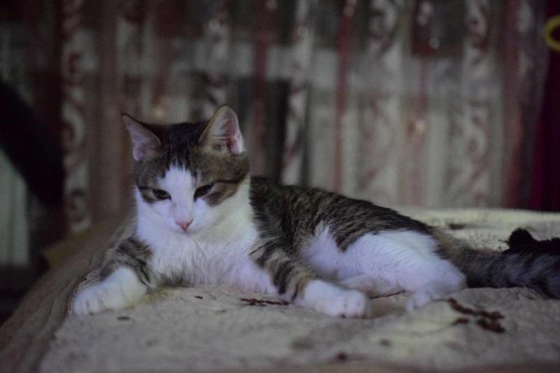 MUGUREL - chat mâle, né mai 2017. Très gentil et doux - CARMINA BUCAREST - adopté en Allemagne 25344310