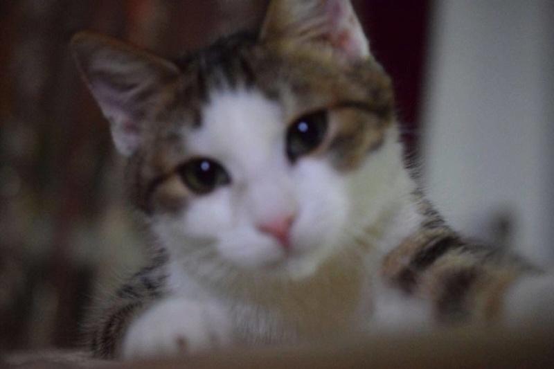MUGUREL - chat mâle, né mai 2017. Très gentil et doux - CARMINA BUCAREST - adopté en Allemagne 25344410