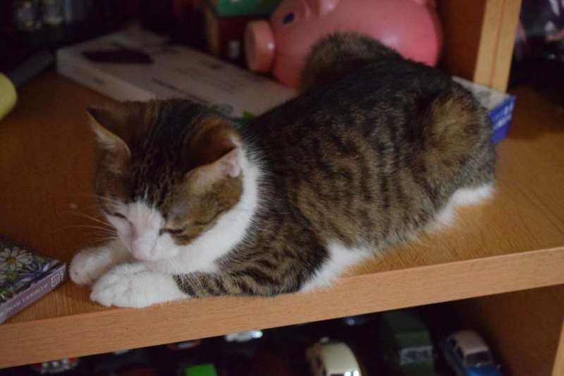 MUGUREL - chat mâle, né mai 2017. Très gentil et doux - CARMINA BUCAREST - adopté en Allemagne 25346110