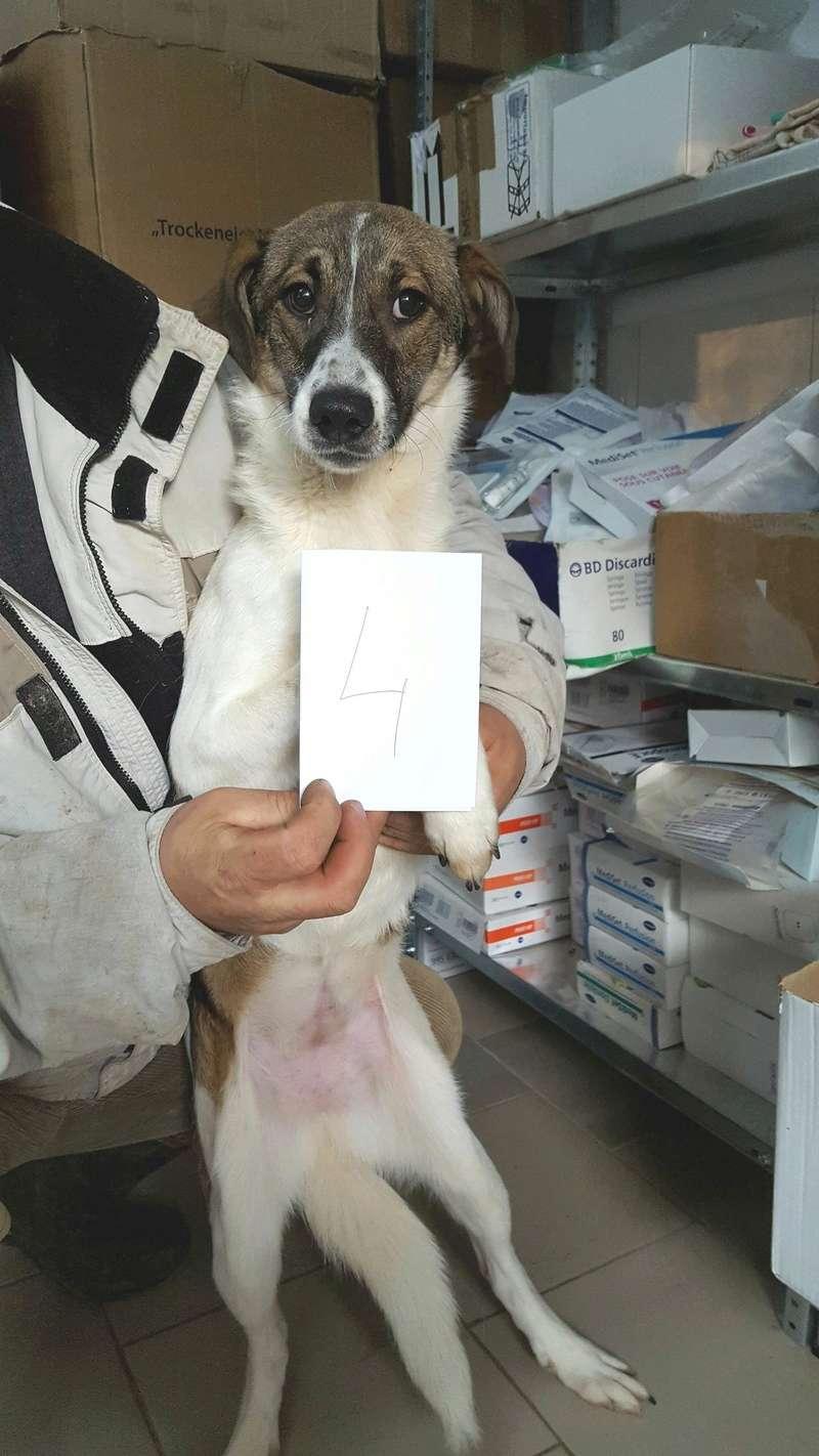 NAJA - femelle croisée de taille moyenne, née en 2016  (PASCANI) - REMEMBER ME LAND 25625312