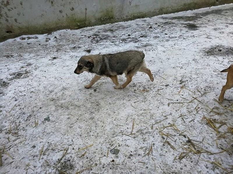 NINO (ex MOÏSE) - mâle croisé de taille moyenne, né environ août 2017 - CHEZ ALINA & ANDA. Adopté par Lucie (depart49)- décédé  26733410