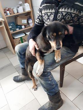 LEWIS - mâle croisé de taille moyenne, né environ mi mars 2014 - REMEMBER ME LAND - Adopté par Romain (Belgique)  28907610