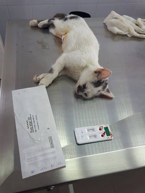 PIXIE - chaton femelle, née environ mi novembre 2017 (Pascani) -  adoptée par Océane (54) 29472210