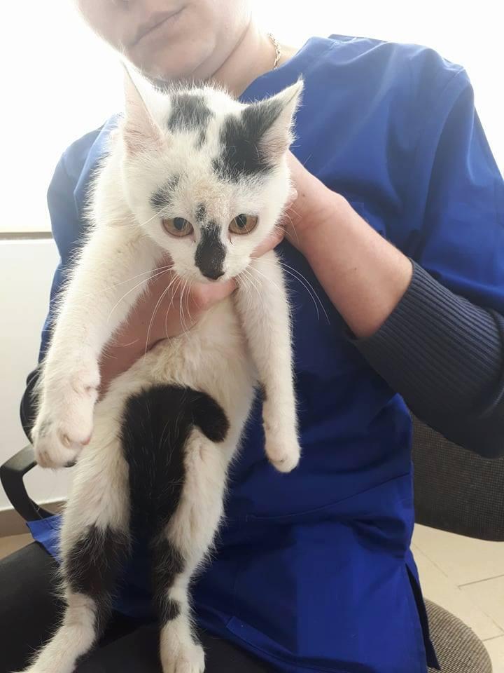 INAYA - chaton femelle, née environ mi novembre 2017 - en FA chez Abysse (92) - ADOPTEE PAR LESLIE et JULIEN (94)  29541210