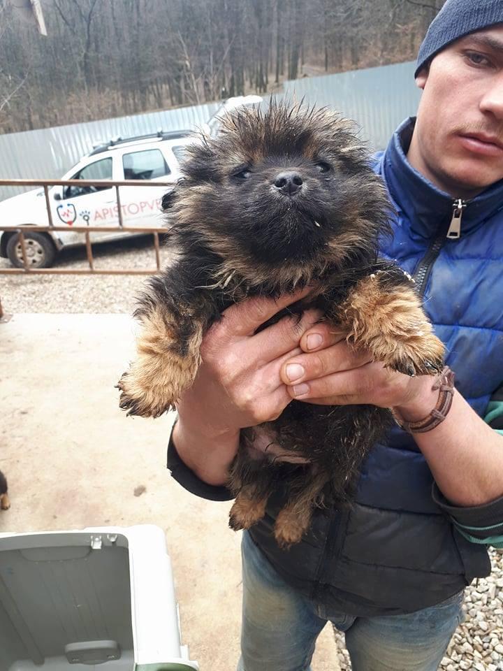 OSLO (ex POTATOE) - mâle croisé de petite taille adulte, né environ janvier 2018. Frère de Twist, fils d'Harmonica - Adopté par Sarah (67) 31895110