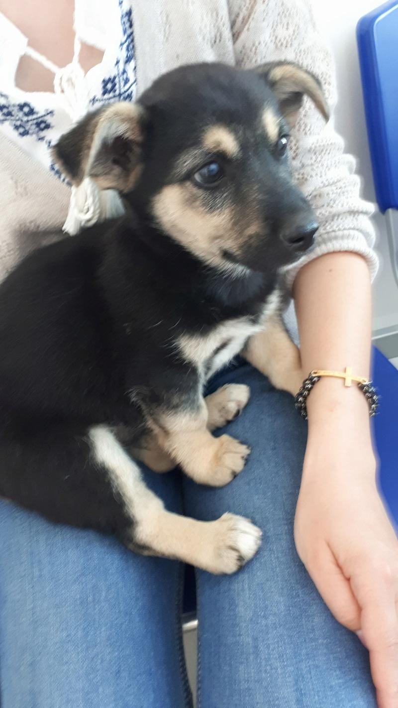 OGGIE  (ex HARMONY) - femelle croisée Jack Russel de petite taille adulte, née mars 2018 - Adoptée par Cécile (57) 34016811