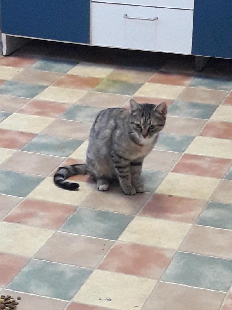 FLORICICA -URGENCE  très jolie chat femelle, née en 2015/2016. Adorable. ADOPTEE EN ROUMANIE 46177310