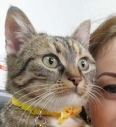 FLORICICA -URGENCE  très jolie chat femelle, née en 2015/2016. Adorable. ADOPTEE EN ROUMANIE 47078511