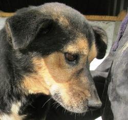 HATSU, mâle croisé, né en 2006, petite taille (Pascani)- adopté par Trish (30)- décédé  Hatsu_10