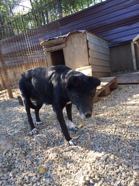 ALICE (ex BOUNTY) - femelle croisée de taille petite, née environ en mars 2007 - CARMINA BUCAREST . Adoptée par Isabelle (depart75)- décédée  Img_2510