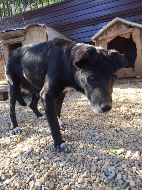 ALICE (ex BOUNTY) - femelle croisée de taille petite, née environ en mars 2007 - CARMINA BUCAREST . Adoptée par Isabelle (depart75)- décédée  Img_2512