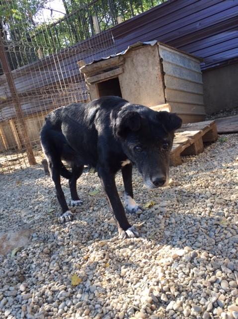 ALICE (ex BOUNTY) - femelle croisée de taille petite, née environ en mars 2007 - CARMINA BUCAREST . Adoptée par Isabelle (depart75)- décédée  Img_2514
