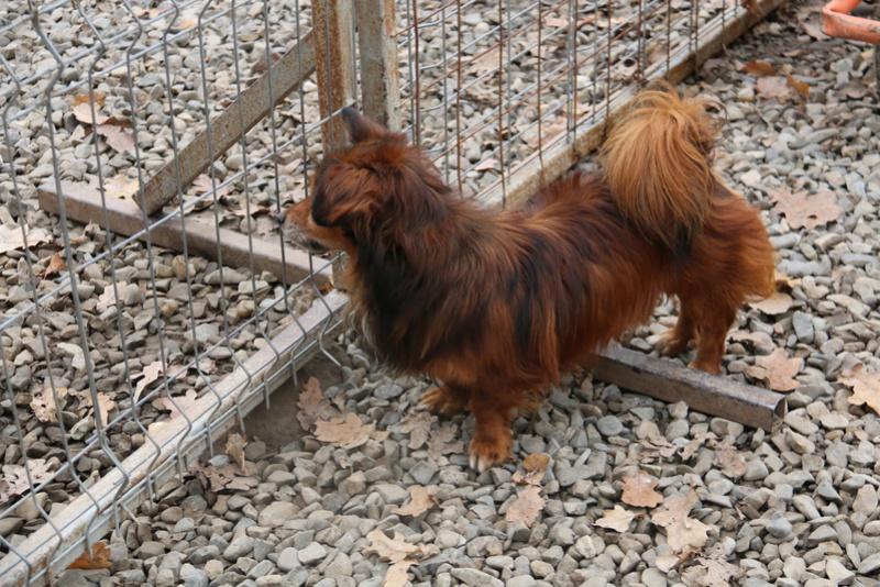 PUMBA - mâle croisé à poils longs de petite taille, né en 2004 ( PASCANI) - adopté par Ginette et René (58)  - Page 2 Img_8513