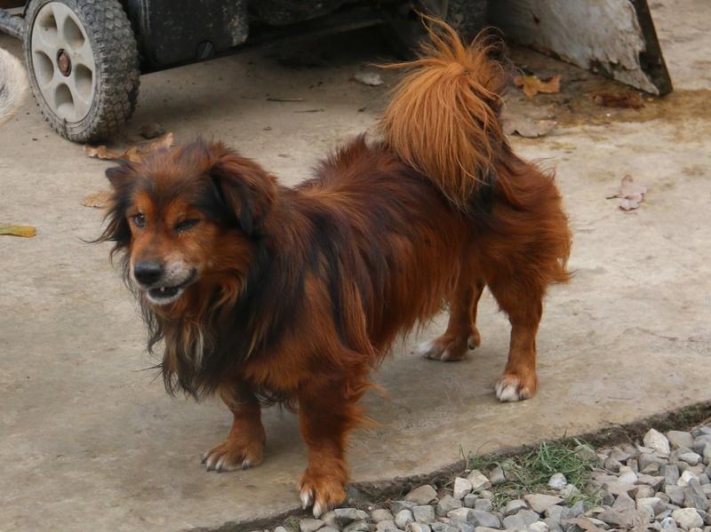 PUMBA - mâle croisé à poils longs de petite taille, né en 2004 ( PASCANI) - REMEMBER ME LAND - En FA chez FalconBlue (18) - Page 2 Img_8710