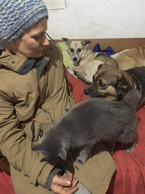LEA (ex LOLLO BRIGITA) - chat femelle, née en 2015 - CAMELIA BUCAREST - Adoptée par Veronica (Belgique) Img_9134
