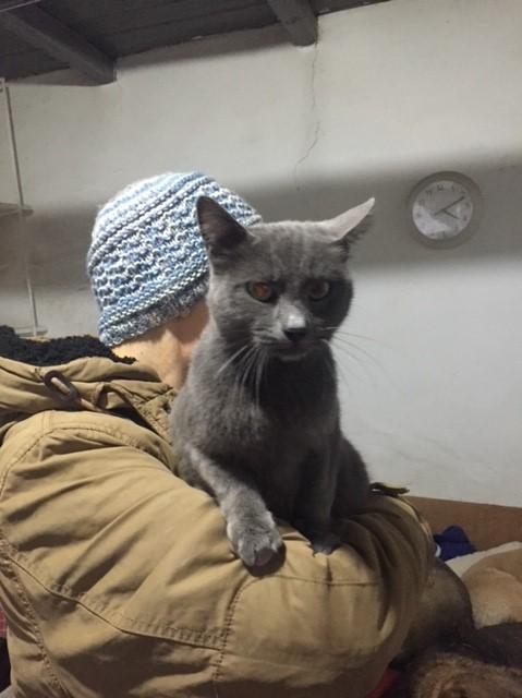 LEA (ex LOLLO BRIGITA) - chat femelle, née en 2015 - CAMELIA BUCAREST - Adoptée par Veronica (Belgique) Img_9136
