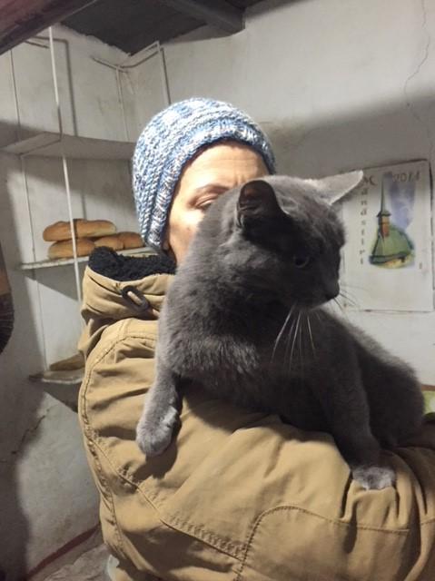 LEA (ex LOLLO BRIGITA) - chat femelle, née en 2015 - CAMELIA BUCAREST - Adoptée par Veronica (Belgique) Img_9137