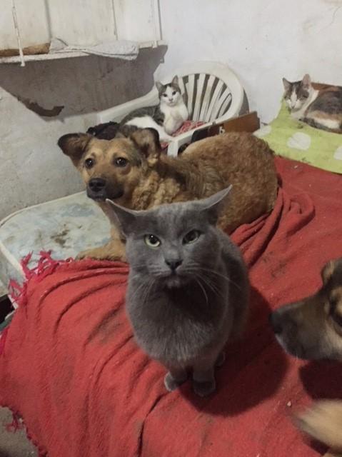 LEA (ex LOLLO BRIGITA) - chat femelle, née en 2015 - CAMELIA BUCAREST - Adoptée par Veronica (Belgique) Img_9138