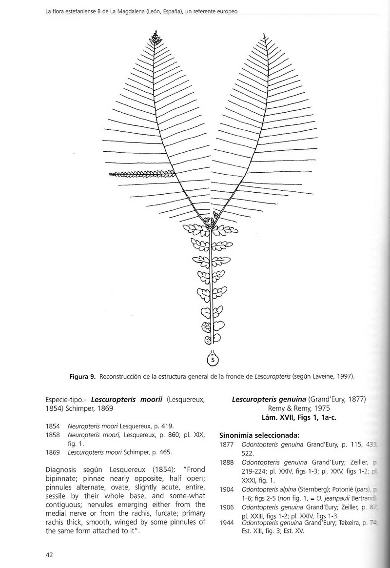 Lescuropteris Genuina Scan0010