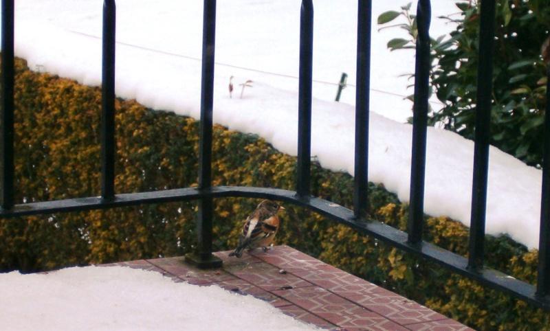 Un oiseau s'est écrasé sur ma vitre, et est enfin reparti. Hpim4728