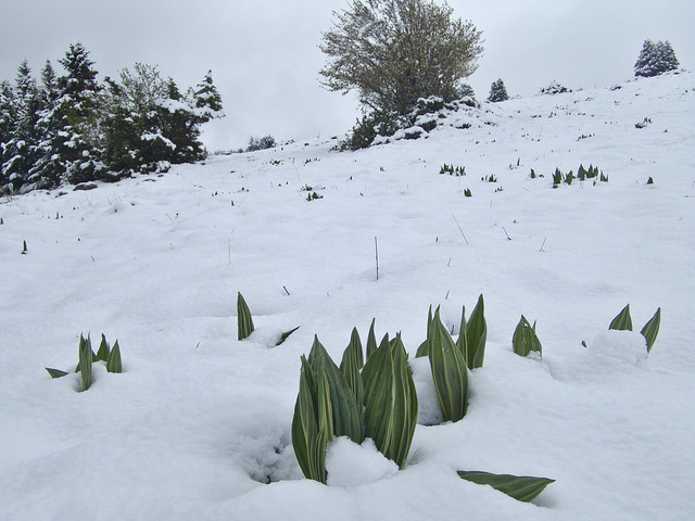 Photo du jour dans le Cantal - Page 2 40269610