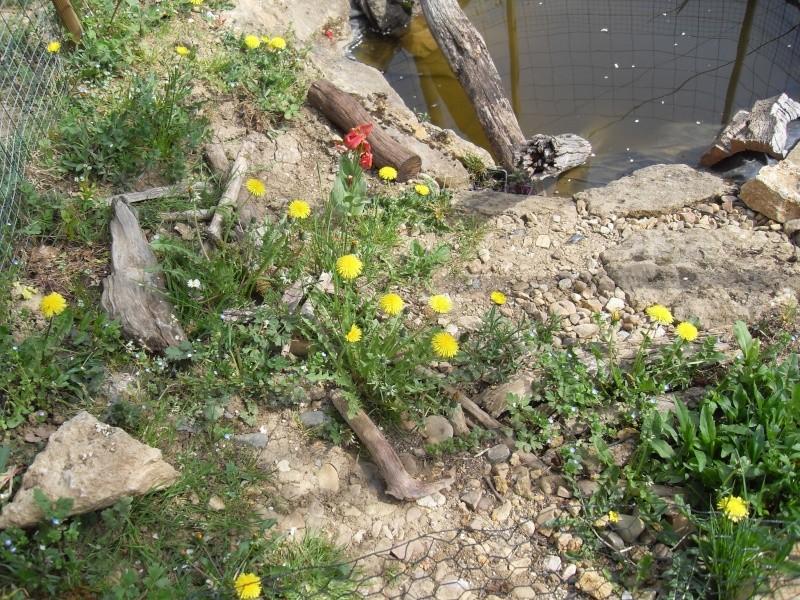 bassin semis enterré ! Sdc10049