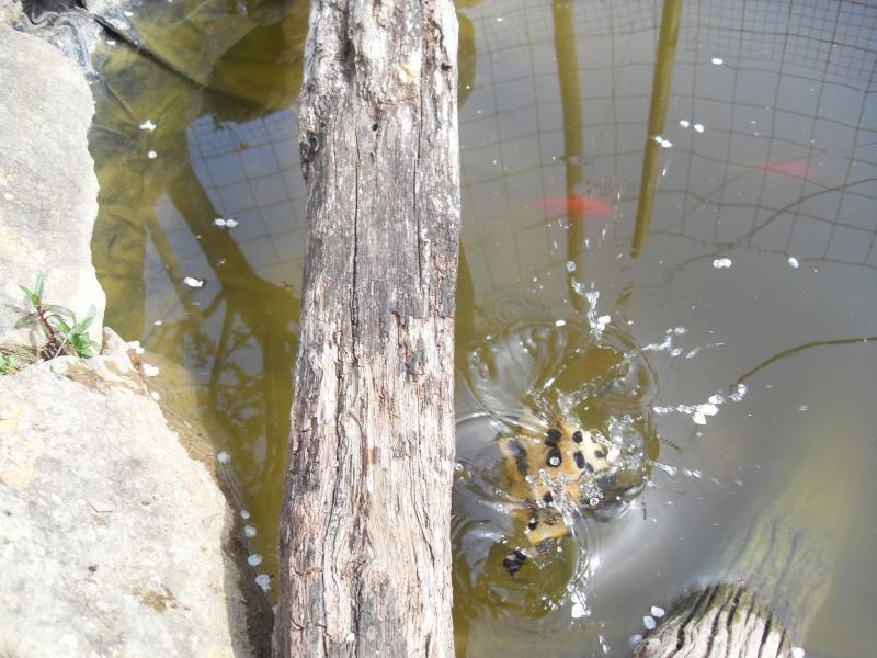 bassin semis enterré ! Sdc10071