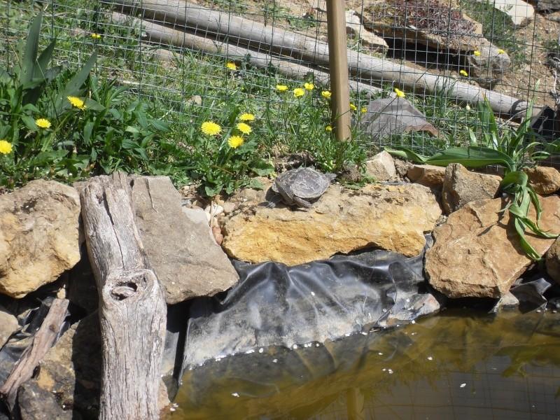 bassin semis enterré ! Sdc10072