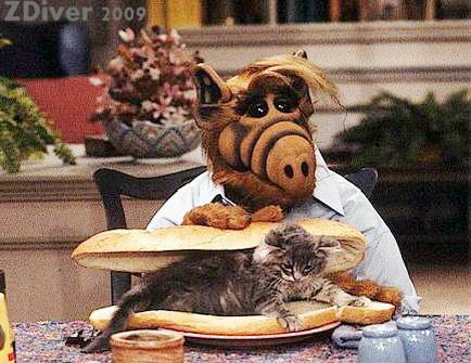Chatte adulte très mignonne Alf10